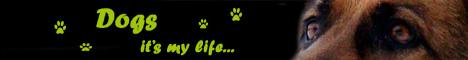 Сайт посвящен моим собакам, породе немецкая овчарка, кинологическому спорту и всему, что связано с собаками.